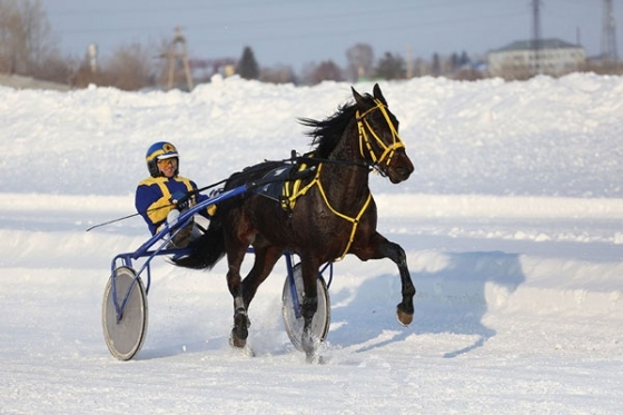 XII Regional Winter Horse Races dedicated to the Hero of the Soviet Union Stepan Ustinov and horse holder Eduard Zagumennykh